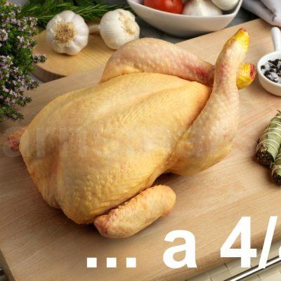Pollo a 4/4